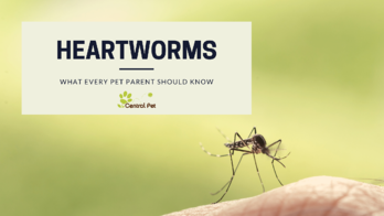 What every pet parent should know about heartworms and mosquitos
