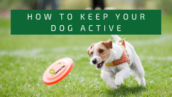 How to keep your dog active