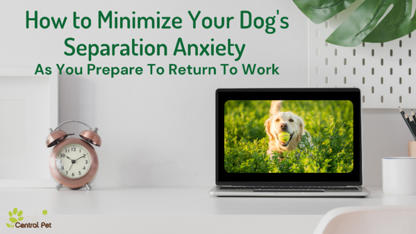 How to minimize your dogs separation anxiety as you prepare to return to the office