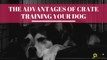 The Advantages of Crate Training Your Dog