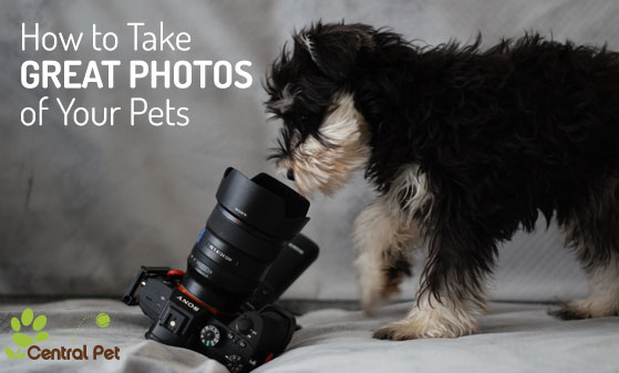 Photo of a puppy staring into a camera sitting on a couch.