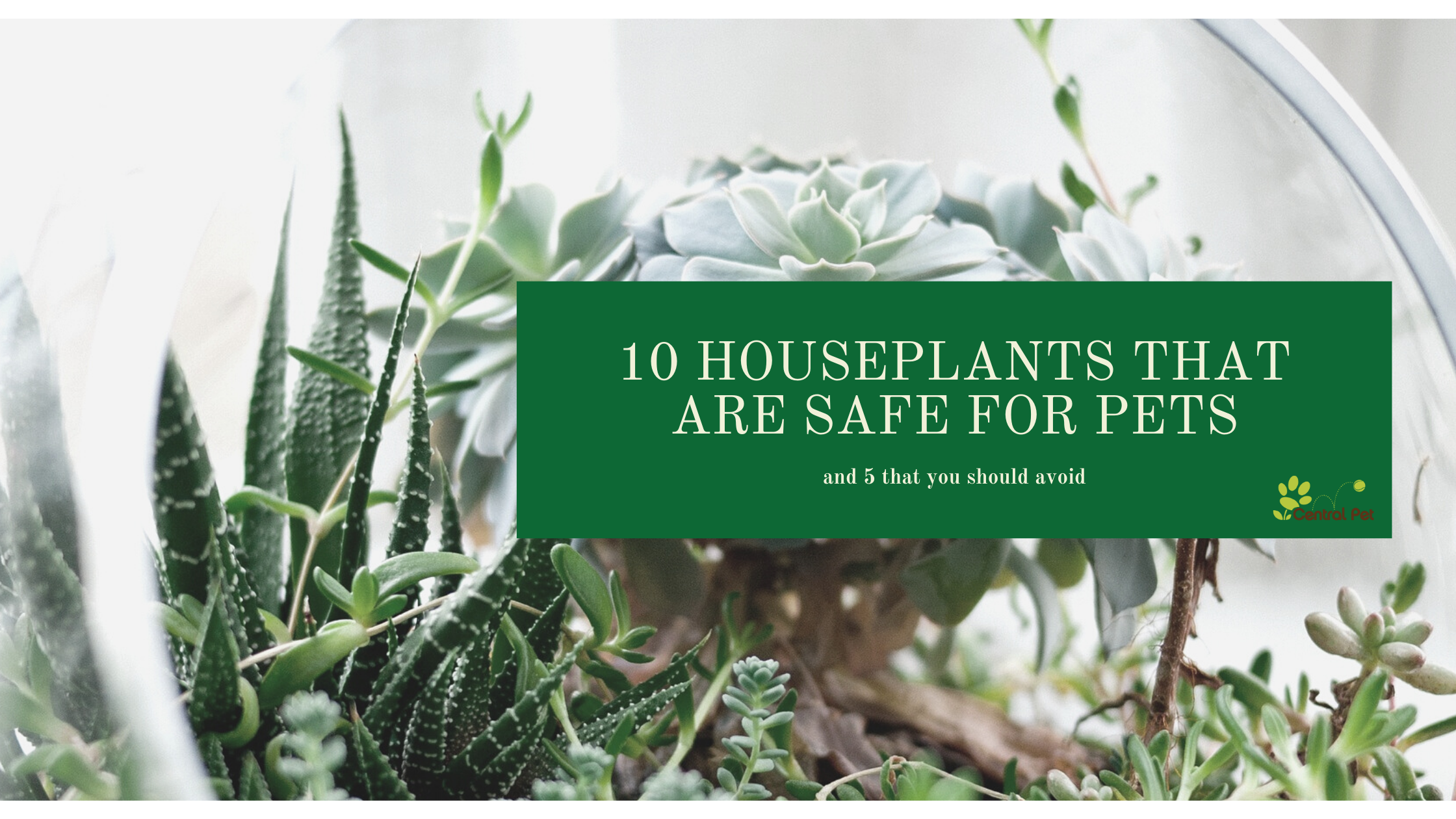 10 houseplants that are safe for your pets