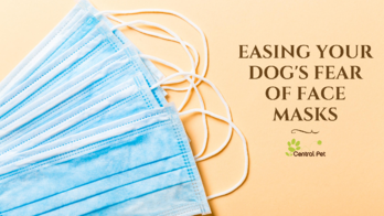Easing your dog's fear of face masks