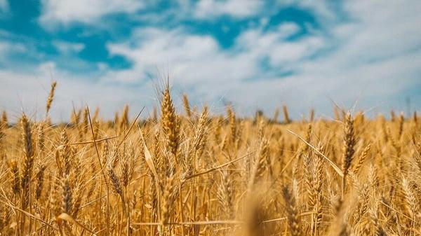 Automatisk håndtering af flere tusind læs korn – og med potentiale til meget, meget mere