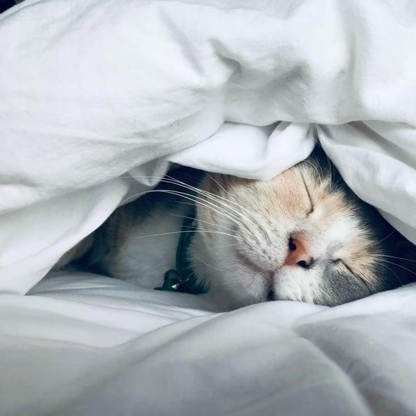 Høst alle fordelene ved løbende opdateringer af Business Central – og sov godt om natten!