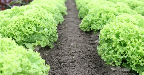 Why the future of food produce is shaped by data and analytics