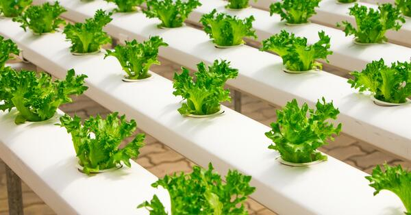 COLUMBUSCAST: Addressing challenges faced by the food industry