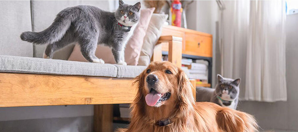Cats and dog living happily after COVID with Invisible Fence® Brand