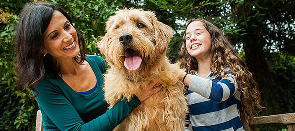 tips for leaving your dog home alone post-Covid