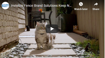 Invisible Fence® Brand Testimonial: Invisible Fence for a Cat Named Nacho