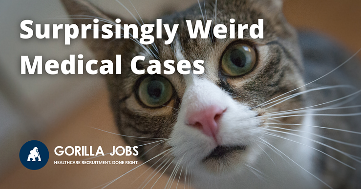 Gorilla Jobs Blog Weird Medical Cases Curious Cat Staring At Camera