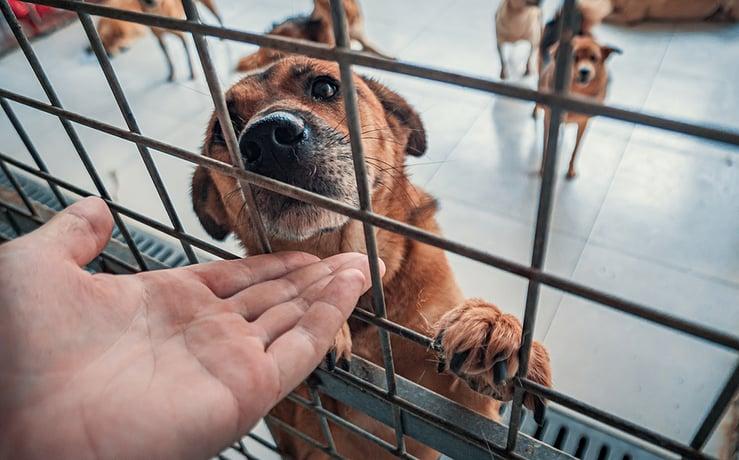 Social Distancing and Pet Adoption