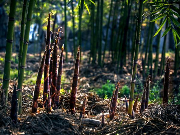 Top 5 Bamboo material environmental benefits