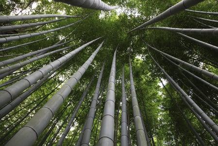Booming Bamboo mostra la (ri)scoperta di un materiale sostenibile con infinite possibilità.