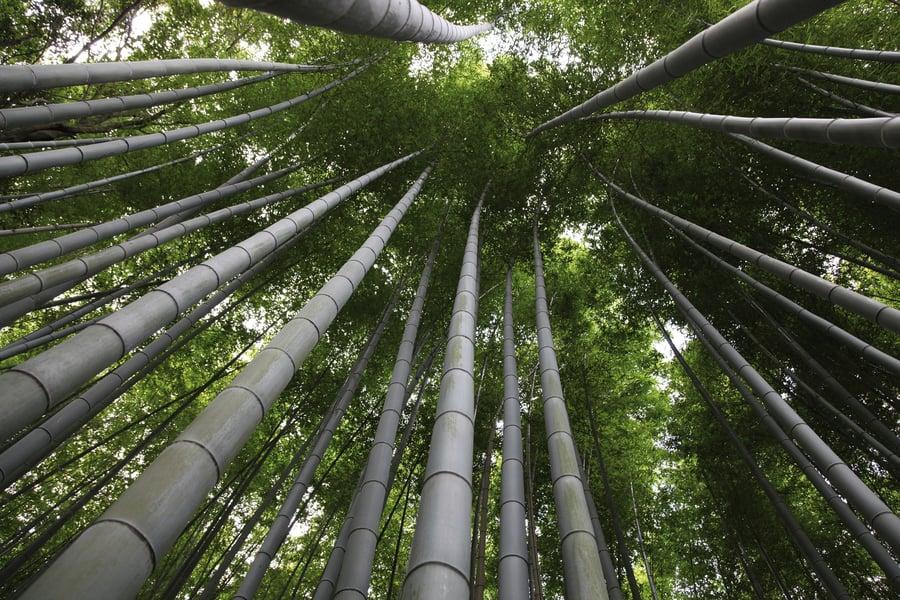 Booming Bamboo muestra el (re)descubrimiento de un material sostenible con infinitas posibilidades