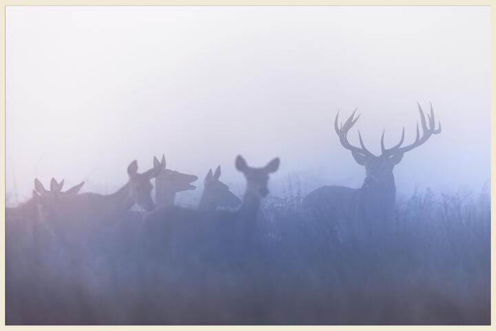 Buck Fever is Here: Tips for Hunting Around Belgrade, MT