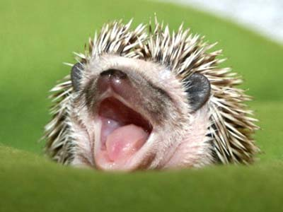 hedgehog baby mobile ed productions