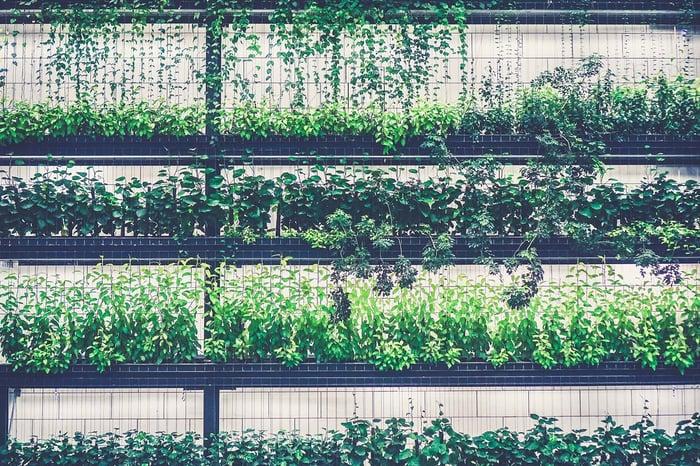 Forget Therapeutics: Will CRISPR Redefine the GMO Stigma?