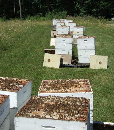 beehives kickapoo honey