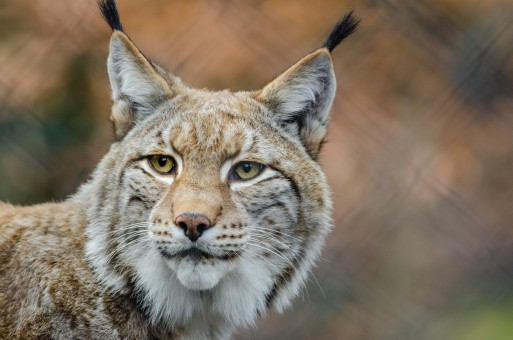 Ubuntu 10.04 (Lucid Lynx) available!