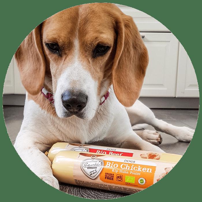 Website Cirkel + BIO hond