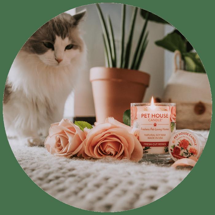 Website Cirkel + Fresh cut roses