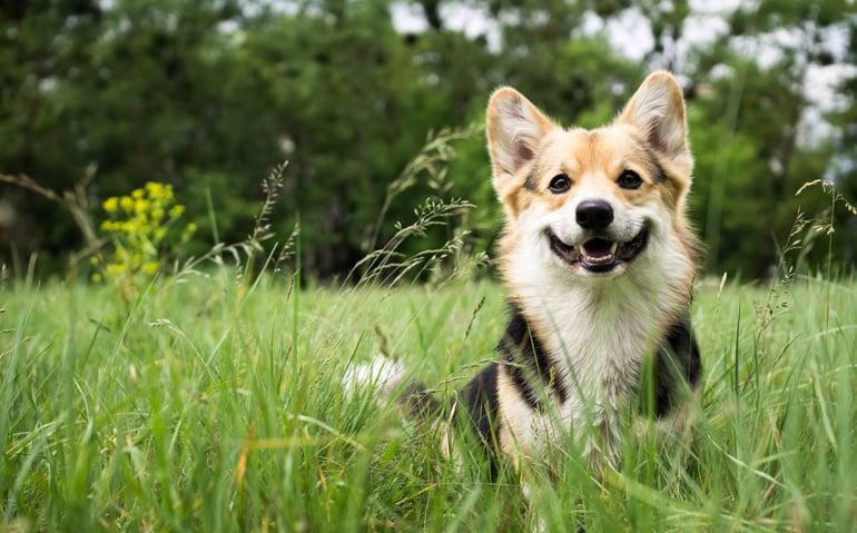 hond huid en vacht