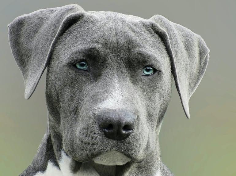 juiste voeding voor huid- en vachtproblemen hond