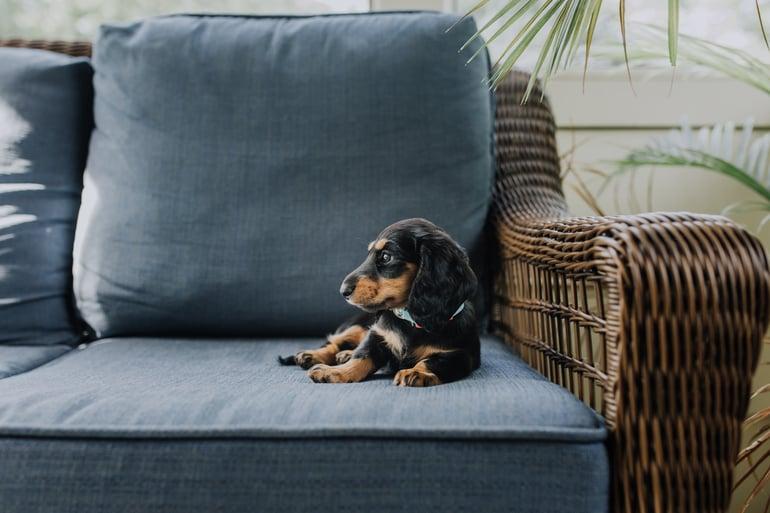 Huis puppyproof maken