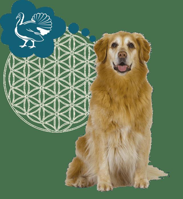 Hond stephanie + icoon kalkoen