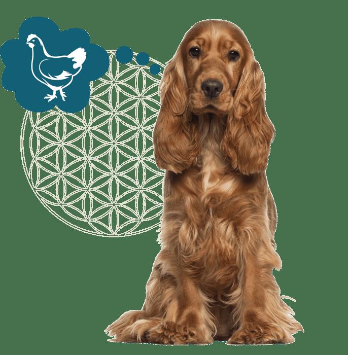 Website afbeelding levensbloem + honden