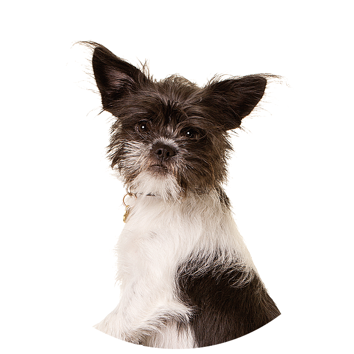 Cirkel + hond Paul