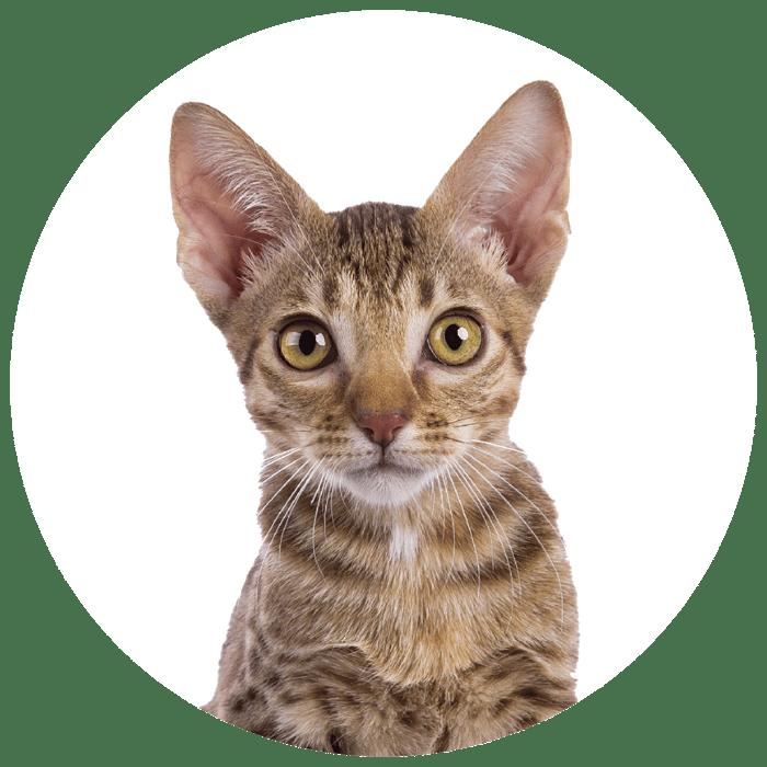 Cirkel + kitten bruin