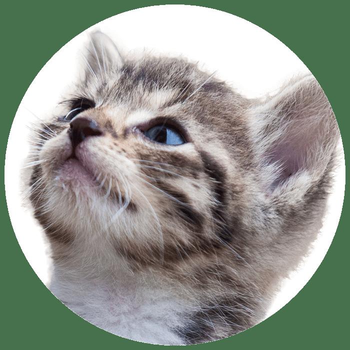 Cirkel + kitten