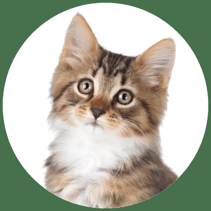 cirkel + kitten bruinwit