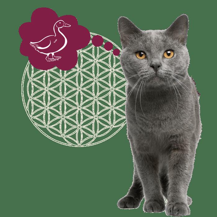 kat grijs + icoon eend_Tekengebied 1