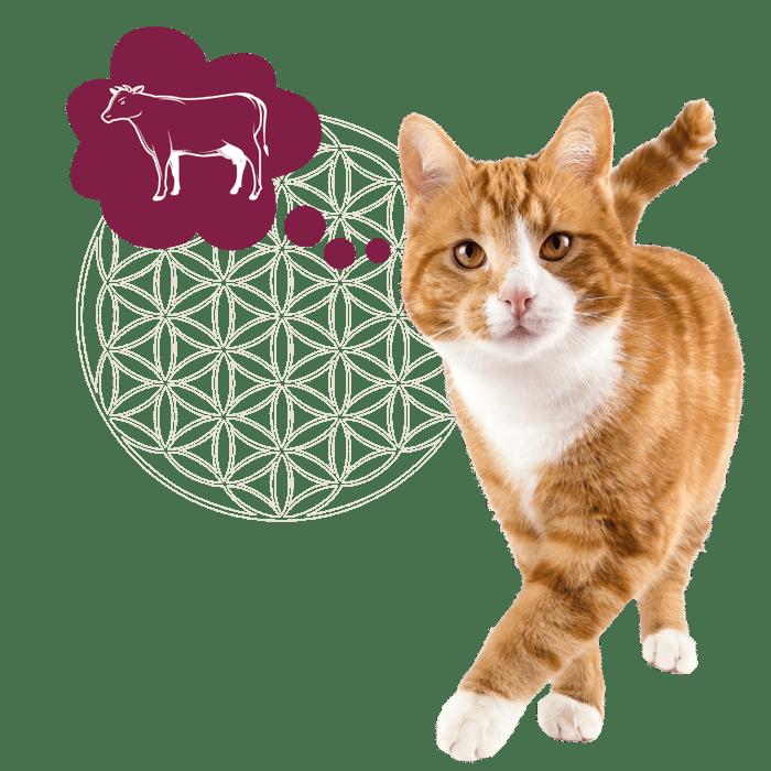 kat rood + icoon rund_Tekengebied 1