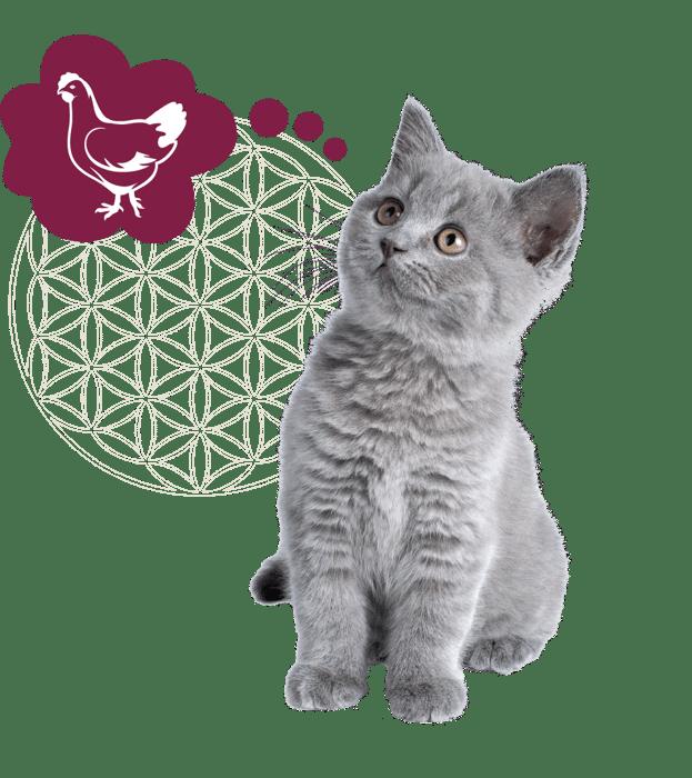 kitten grijs + icoon kip