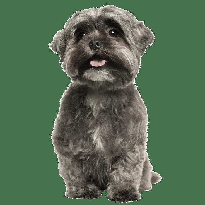 klein grijs hondje_Tekengebied 1