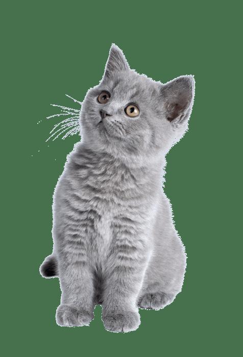 kitten-min