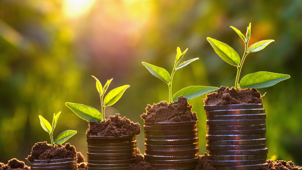 Grow Your Wealth In A Legal Tax