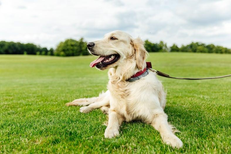 Pet Screening Is a Must! Atlanta Property Management Tips