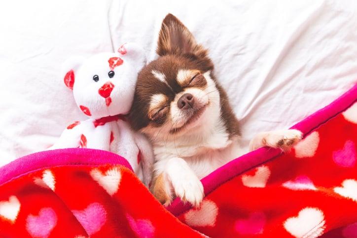 February Focus on Love and Heart Health