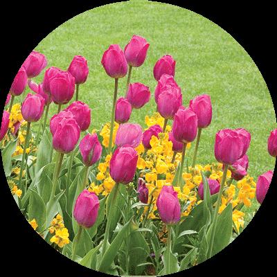 flower-plantings