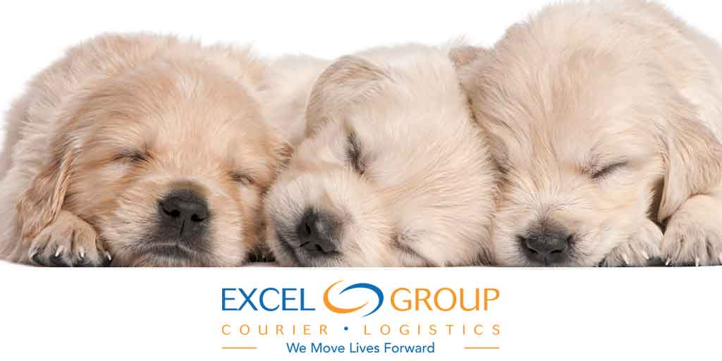 Pet Courier Services by Excel Courier: Good News on a Ruff Day