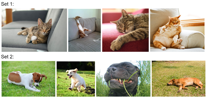 Two rows of images: the top row has four photos of cats on couches, the bottom row has four photos of dogs in fields.
