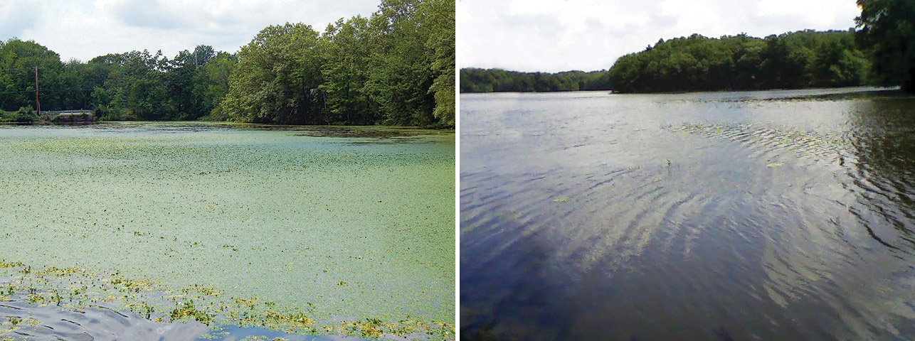 3_Fisk Pond Before & After_c.jpg