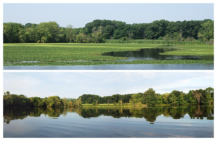 6_Nashua_Rvr_BEFORE__AFTER_harvesting_water_chestnut_c.jpg