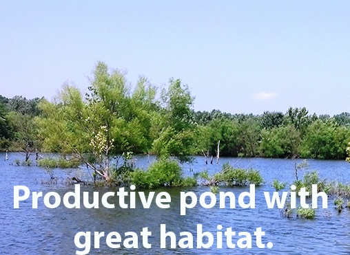 7_acre_pond_-_productive_pond_with_great_habitat_for_forage_fish_caption_c