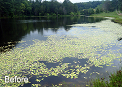 Agricultural_Private_Pond_Free_Union_VA_6.00_acres_BEFORE_water_shield_treatments